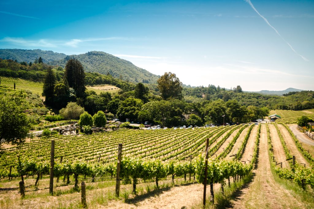 Paso Robles Vineyard Insurance
